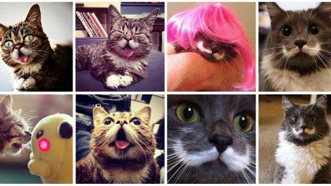 cats-of-instagram